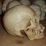 Feng skull RF.jpg