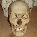 Feng skull RT.jpg