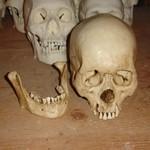 Feng skull S FNT.jpg