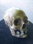 Indian Skull  300 (2).JPG