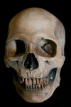 Museum Quality Foam Avery Skull Aged