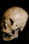 Reilly Skull With Jaw  