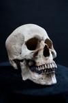 Wei Skull -240.jpg