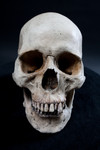 Wei Skull -242.jpg