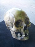 american indian female replica skull 350.JPG