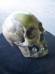 american indian female replica skull 350 9.JPG