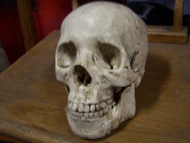 Natural Bone Finish Skull