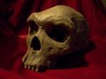 neanderthal jawless skull