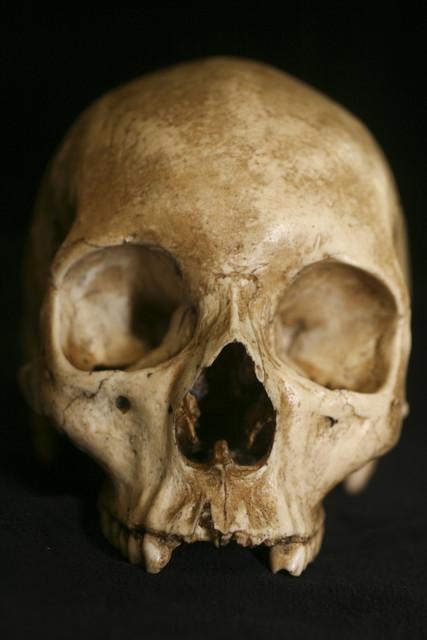 slide show for album    realistic human skull props