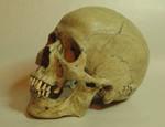 wei skull 85