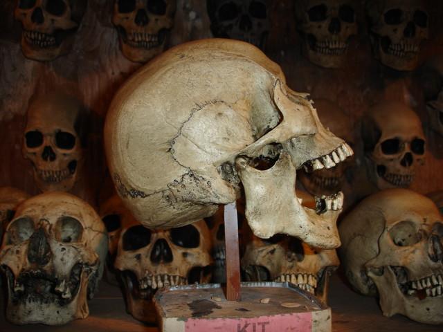 Props For Rent Amp Portfolio Realistic Human Skull Props
