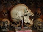 wei skull profile 083.JPG