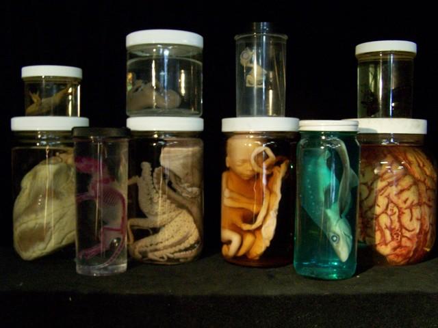 Assorted Jars - 10 specimen assortment