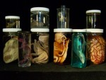 Assorted Jars - 10 specimen assortment