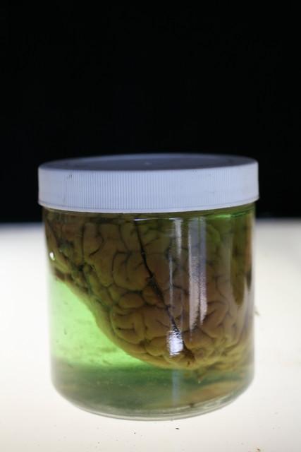 Brains - brain in small jar 42