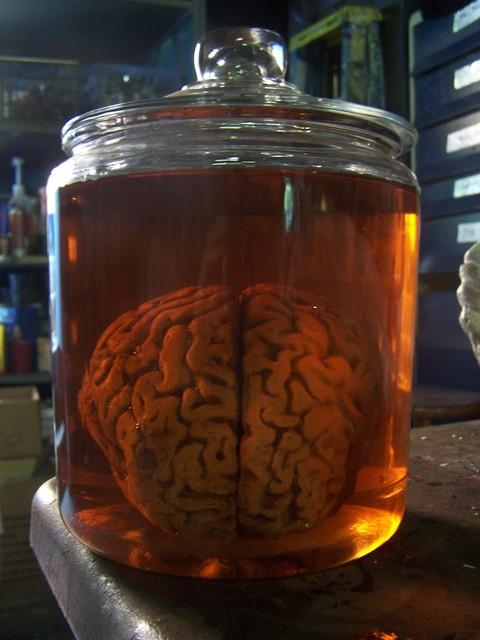 brains - lifesize vinyl prop in vintage jar