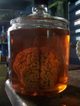 brains - lifesize vinyl prop in vintage jar