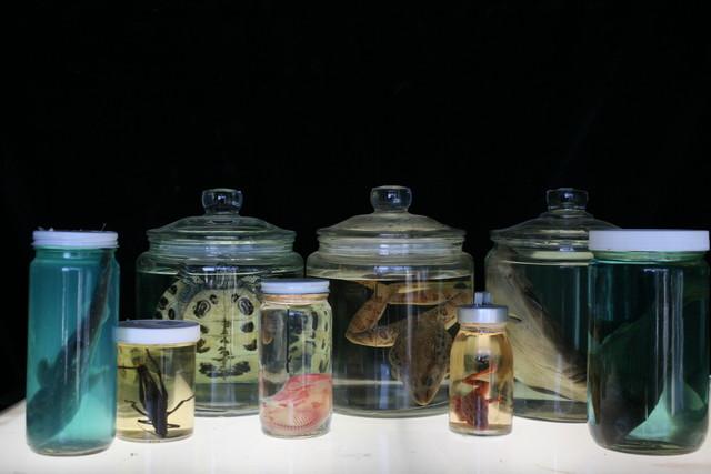 Assorted Jars - specimen jars 09.JPG