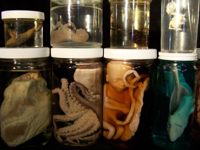 Assorted Jars - specimen jars 10