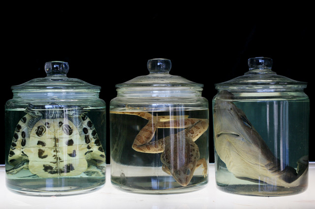 Assorted Jars - specimens in vintage jars 07.JPG