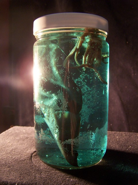 slide show for album    preserved specimens and specimen jars