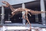 Highlight for Album: Tyrannosaurus Prop Rentals