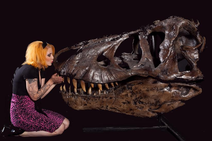 killer whale skull