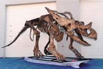 Chasmosaurus belli - 17ft 24000.JPG